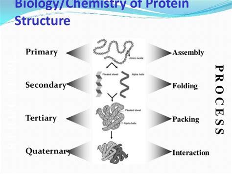 protein 4 structures protein structural organisation