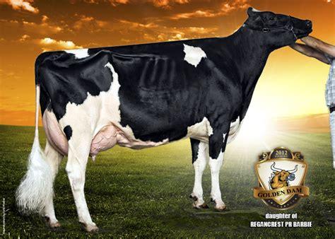 Topi Elleven Cow regancrest pr 2012 golden dam finalist the