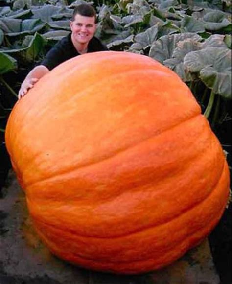 When To Plant Pumpkin Seeds For Halloween - temple community garden seed saving feat giant pumpkins