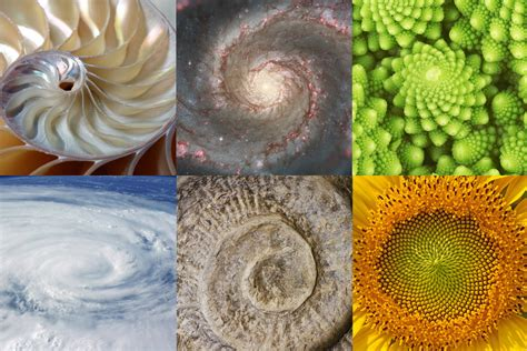 the golden section in nature all you need to know about the golden ratio in graphic design
