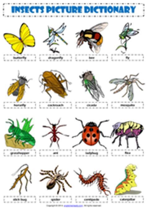 printable insect poster insects esl printable worksheets and exercises