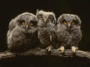 pictures of owls for the gorgeous princess gt gt do you find owls check