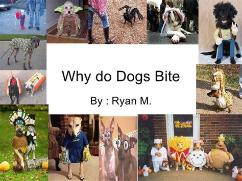 why do dogs bite why do dogs bite