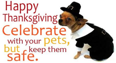is turkey ok for dogs a thanksgiving meal safe for your dolly the doxie