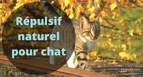 Repulsif Pour Chat Jardin by Comment 233 Loigner Les Chats R 233 Pulsif Naturel