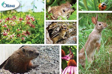 backyard wild animals wildlife speaker series city of ottawa