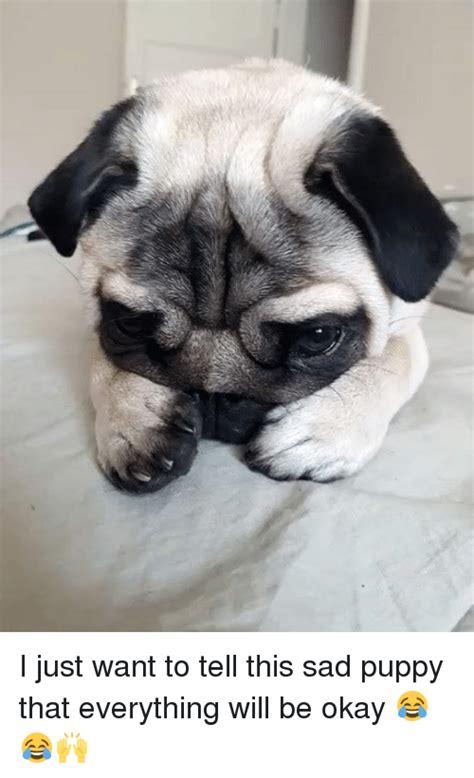 Sad Okay Meme - 25 best memes about sad puppies sad puppies memes