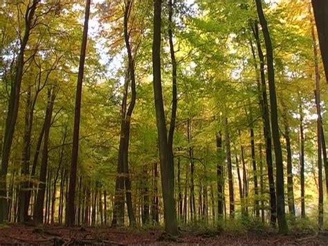 Pflanze Bestellen 655 laubwald herbst spessart deutschland rm 471