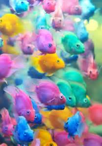 fish colors strange school of colorful tropical fish great pastel
