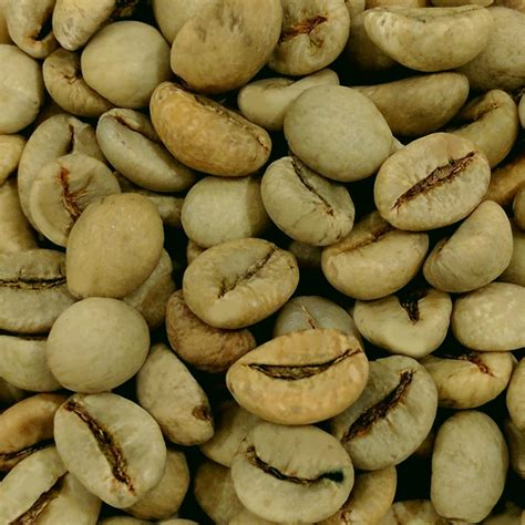 Malabar Washed Process green coffee free shipping 49 buycoffeecanada