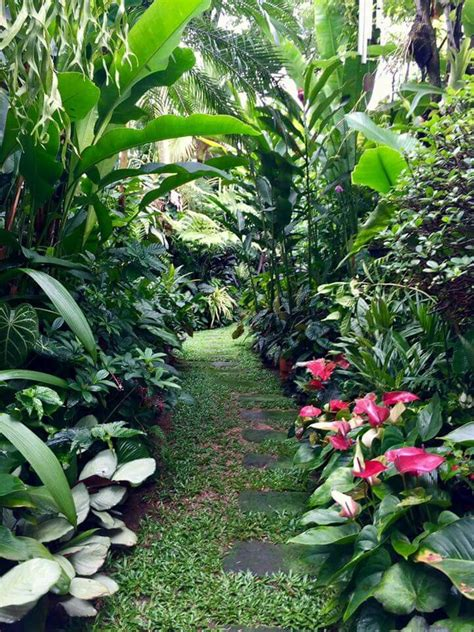 17 best images about plants on gardens tropical 38 great tropical backyard landscape designs