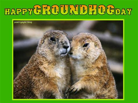 groundhog day buddhism groundhog happy quotes quotesgram