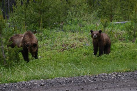 timothy treadwell bear attack my nephew tony s little brother and me images frompo