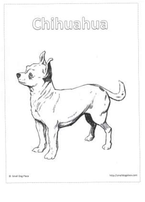 coloring pages of maltese puppies chihuahua pencil coloring pages