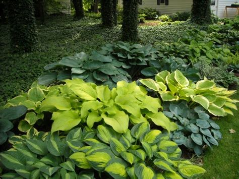 Wu Garden by 1000 Images About Hosta On
