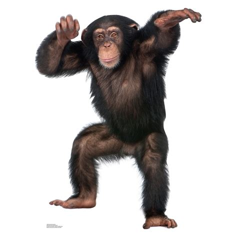 Flat Decoration by Young Chimpanzee Monkey Ape Life Size Stand Up Cardboard