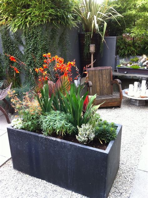 design planters modern tropical courtyard tropical landscape