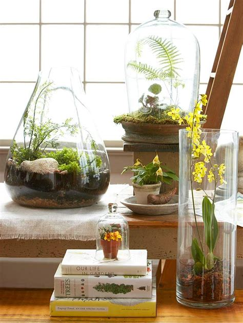 Fragrant Indoor Plants Low Light - top plants for terrariums