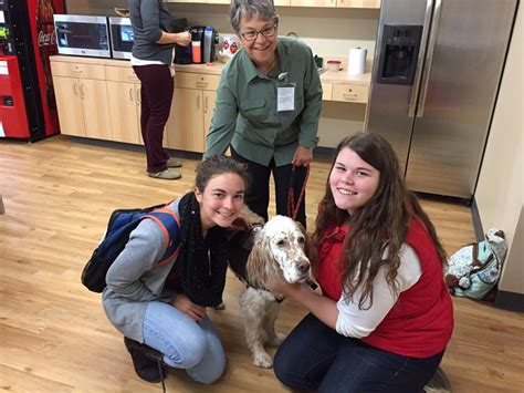 english setter therapy dog therapy dogs at morgan help reduce stress partners in