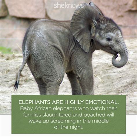 8 Facts On Elephants elephants facts