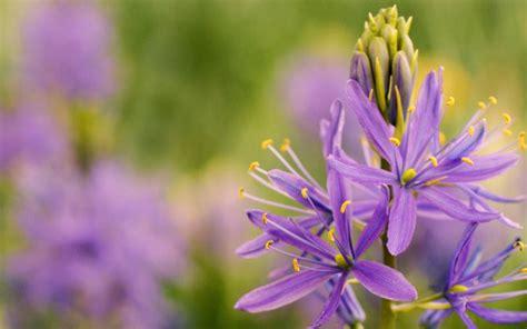 Charming Flower Garden Pictures #1: 241227f912b0573cfa6b65f2b8886250-500.jpg