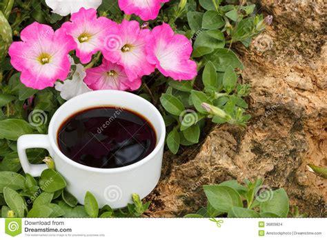 caffe fiori tazza di caff 232 fiori della petunia immagini stock