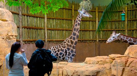 lincoln park zoo in chicago illinois expedia