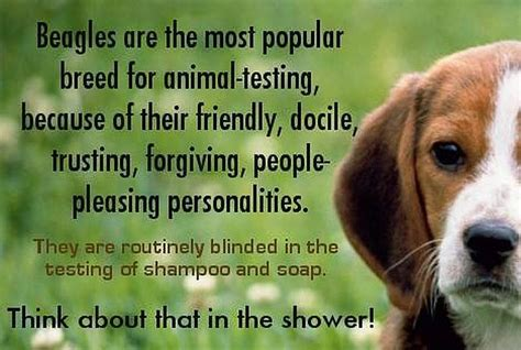 does bed head test on animals beagles quotes like success