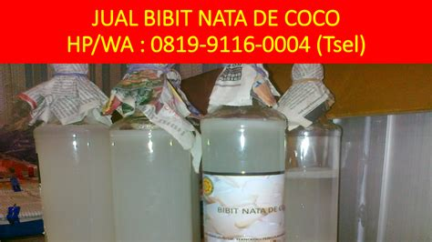 Bibit Bakteri Acetobacter Xylinum jual starter nata de coco hp wa 0819 9116 0004 tsel
