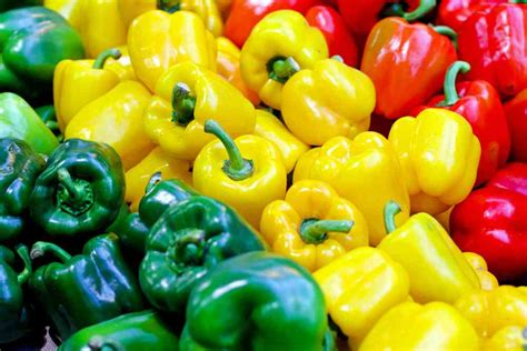 can dogs eat jalapenos can dogs eat bell peppers green yellow ultimate home