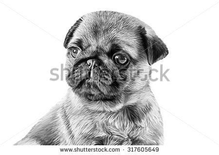 pug black and white drawing stock images similar to id 123357739 i quot pug quot so quot pug quot is king