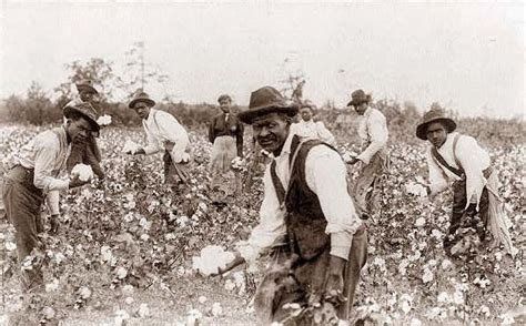 a black s journey from cotton picking to college professor lessons about race class and gender in america black studies and critical thinking books picking cotton early 1900 s pics picture