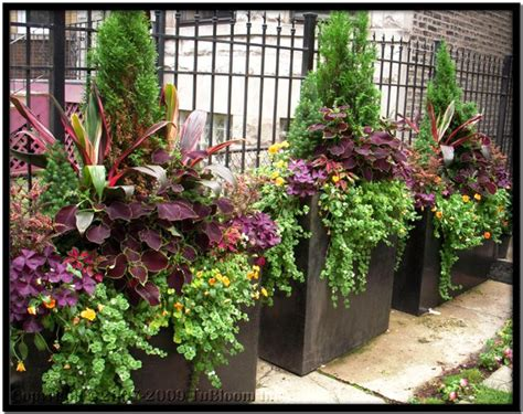 Large Container Gardening Ideas 1000 Ideas About Large Planters On Pinterest Large Outdoor Planters Large Garden Pots And