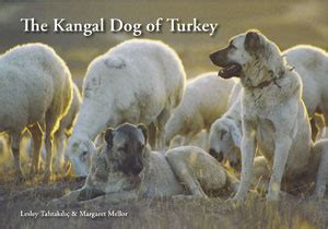 kangal price kangal kopegi the kangal of turkey