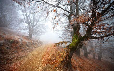 autumn trees path mist wallpapers autumn trees path