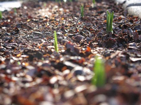 types of mulch 171 home life weekly