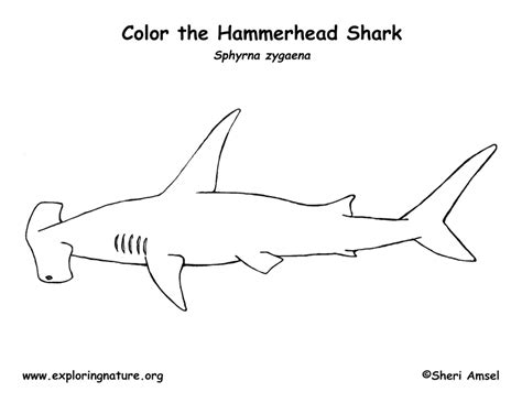 coloring page of a hammerhead shark shark hammerhead coloring page exploring nature