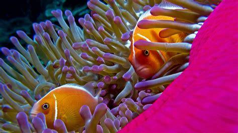 colorful ocean wallpaper aquarium underwater water sea fish beautiful w 1920x1080