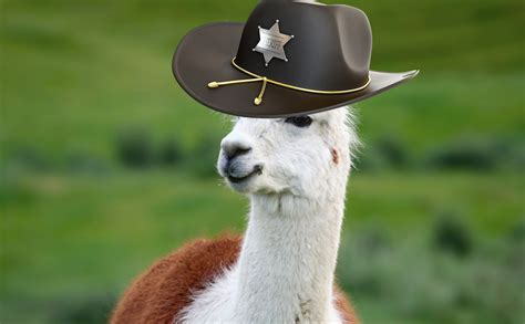 Modern Rancher by Got Predators Don T Shoot Get A Llama Modern Farmer