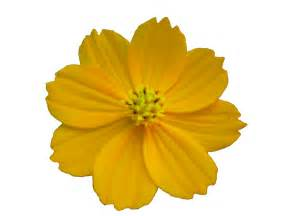 Daisy Plants Flor Png Flower Png By Malkarma On Deviantart