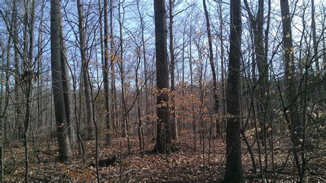 have a wooded lot time to build a forest book nook cumberland land company kingston springs secluded wooded