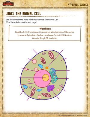 printable animal cell labels 4th grade science printable worksheets lesupercoin