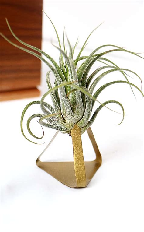 diy air plant holder diy metal air plant stand happiness is creating