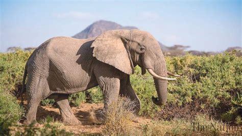 google images elephant protecting elephants with google
