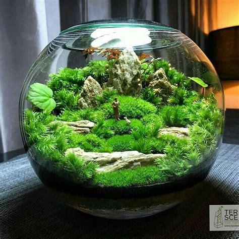 mahmut kirnik  terrarium scene garden terrarium