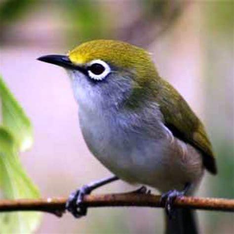 Multi Bird Pakan Burung Parrot burung bird