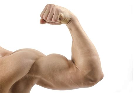 how to get better at arm what is average bicep size enkiverywell