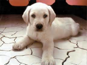 Dog Wallpaper by Dogs Food Stuff Cute Puppy Wallpapers