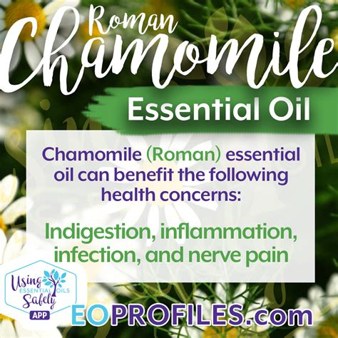 chamomile safe for cats all about german and chamomile essential oils