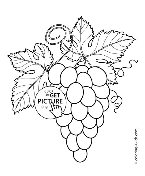 coloring page of grapes on a vine grapes with leaves fruits and berries coloring pages for